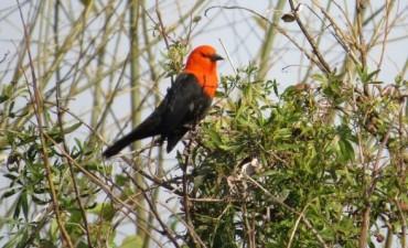 Difundieron los primeros resultados de un relevamiento de biodiversidad en el Delta