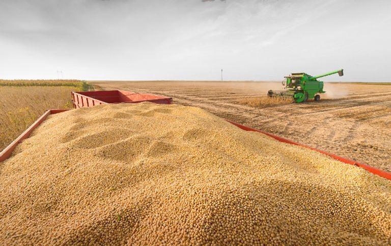 En plena cuarentena, el agro cosechó un 15% más que el promedio de los últimos cinco años