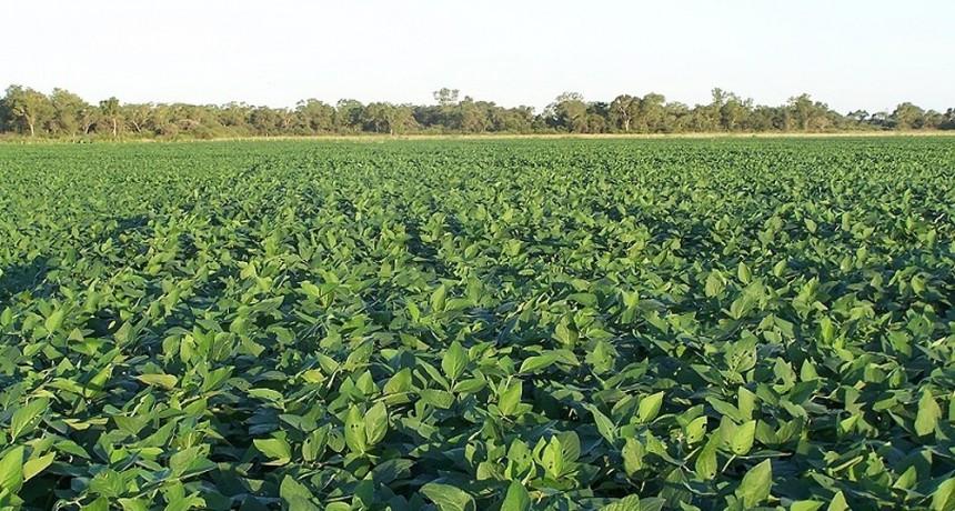 Cruces entre exportadores y productores por supuesta retención especulativa de soja