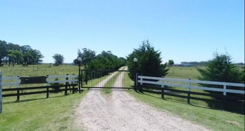 La actividad inmobiliaria rural registró una caída interanual de 49% en marzo