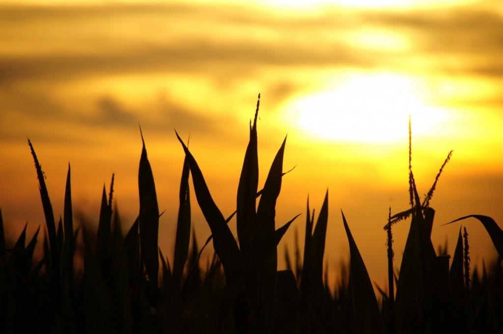 A más de un mes del inicio del otoño, pronostican el primer descenso marcado de temperatura y más lluvias
