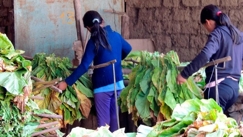 Cafiero presenta un programa con el fin de erradicar el trabajo infantil