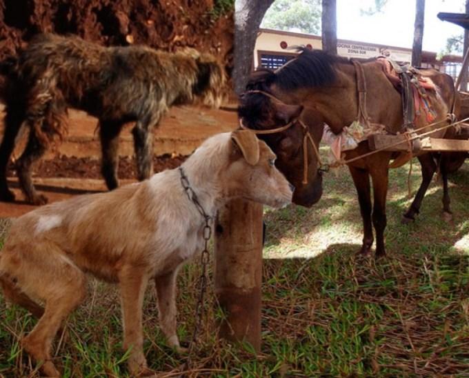 Posadas: Multas de hasta 15 mil pesos por maltrato animal