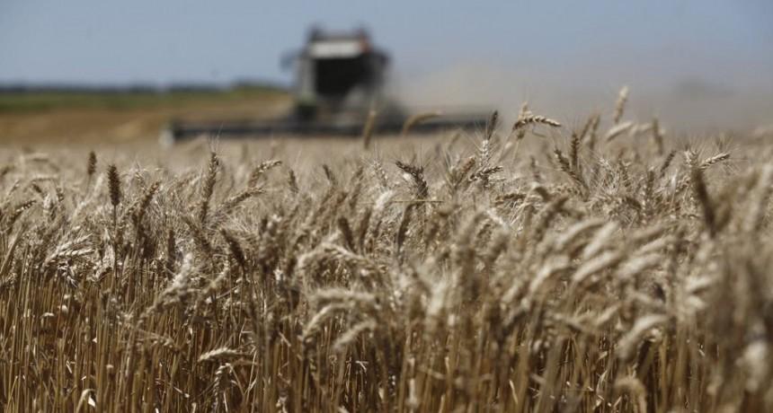 Mercado de granos: los molinos sostienen al trigo