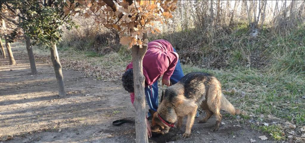 Cosecharon trufas por tercera vez y cuentan los secretos de trabajar con perros