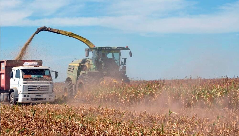 Continúa la cosecha nacional y sorprenden los rindes del maíz y sorgo