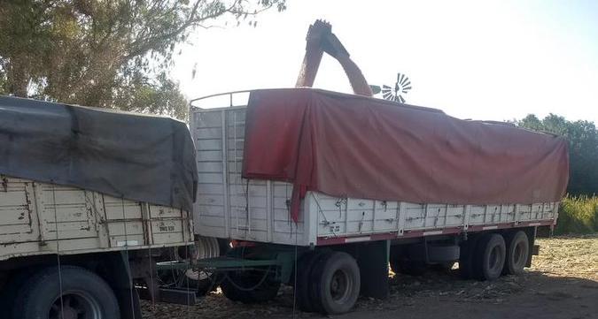 Cómo funciona la Carta de Porte Electrónica que será obligatoria para traslado de granos