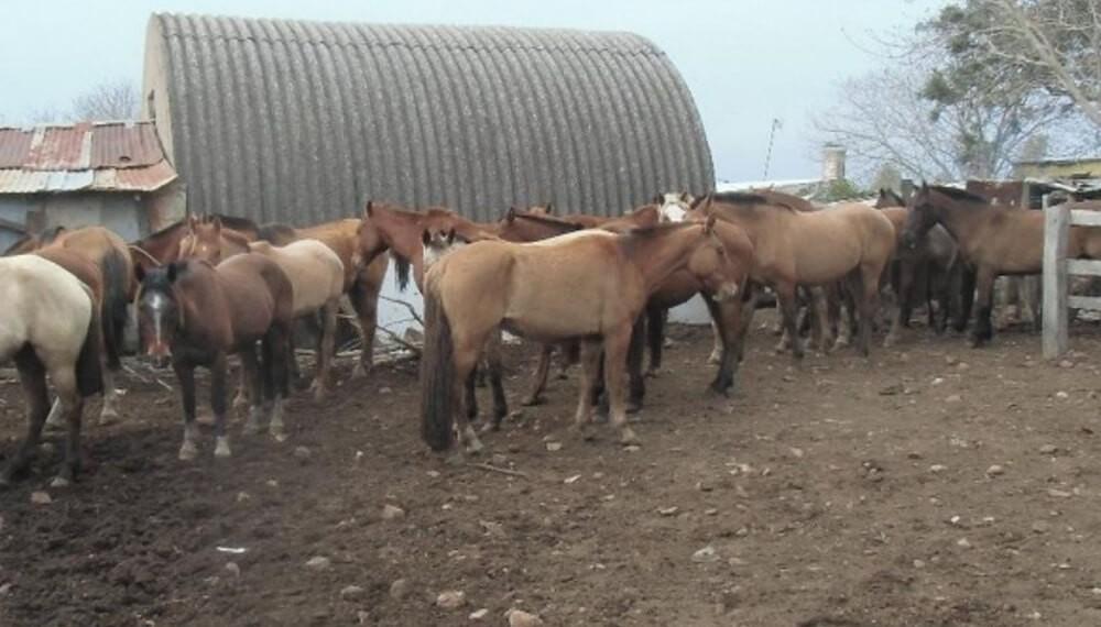 En Mendoza están vendiendo carne de caballo en comercios y podría haber multas
