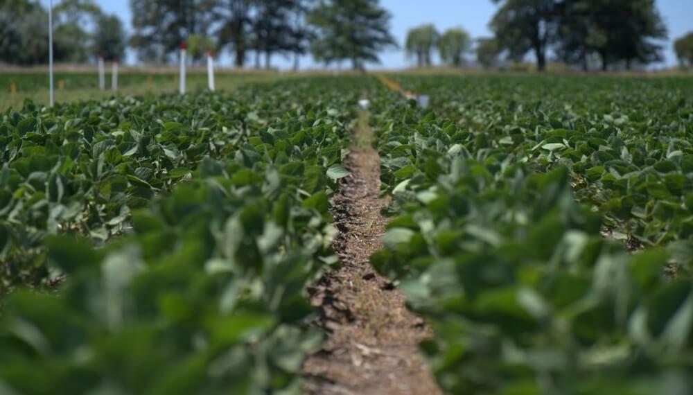 Bioestimular la semilla de soja ayuda a corregir fallas en la calidad de siembra
