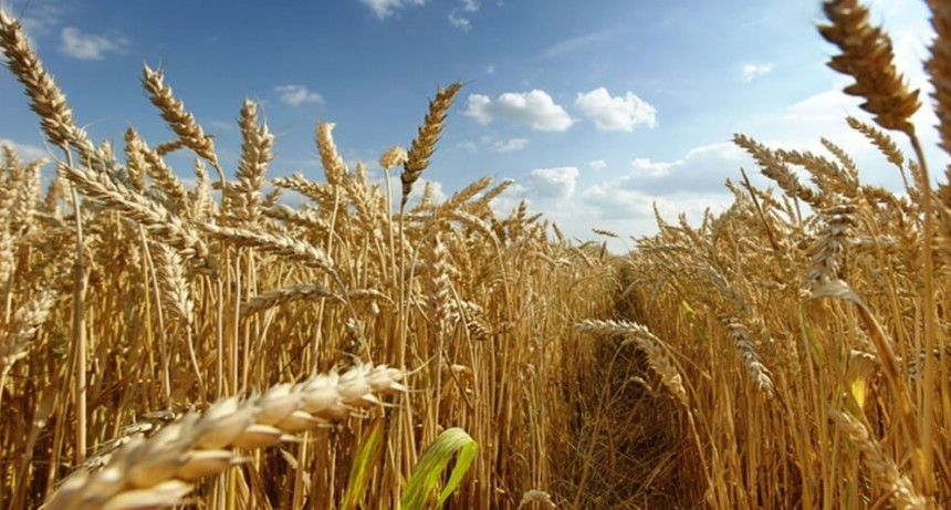 El agro, el principal activo para un posible canje de deuda con el FMI