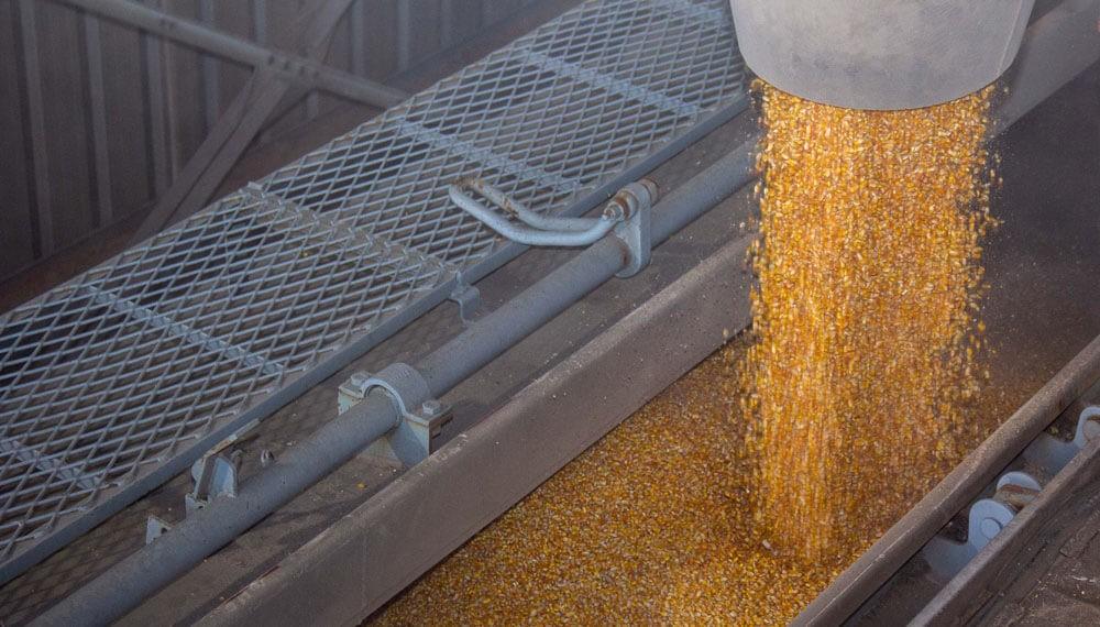 Maíz: cubierto el saldo exportable, solo se despachará lo adquirido por los exportadores