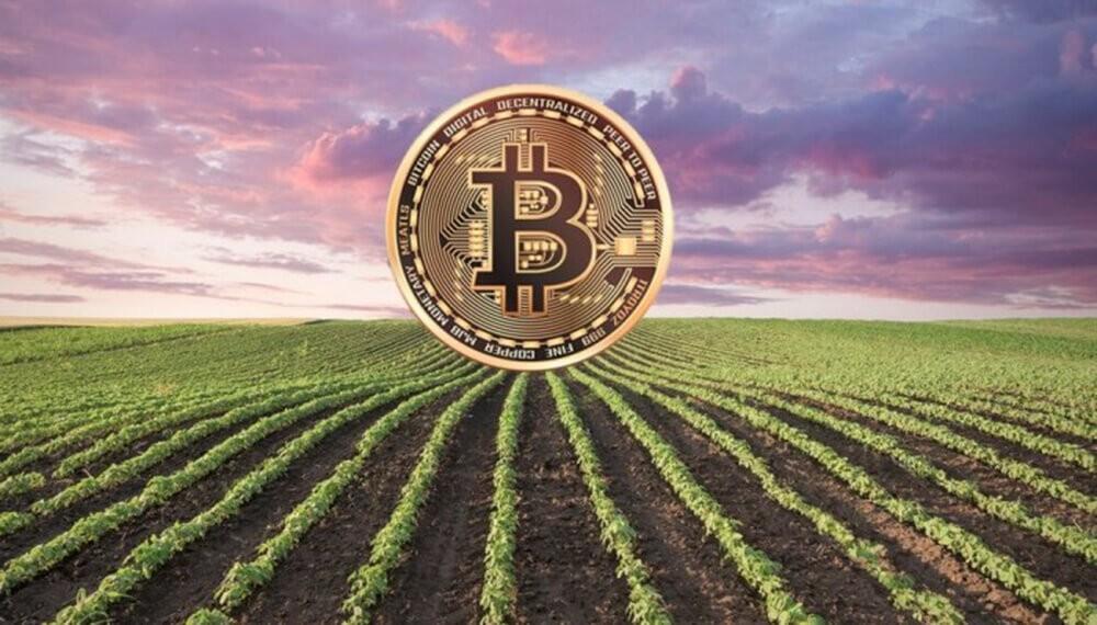 Agrotoken: la plataforma que permite al agro realizar actividades comerciales con tokens