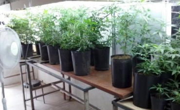 Desbaratan una banda de narcos que tenía un invernadero con más de 60 plantas de marihuana